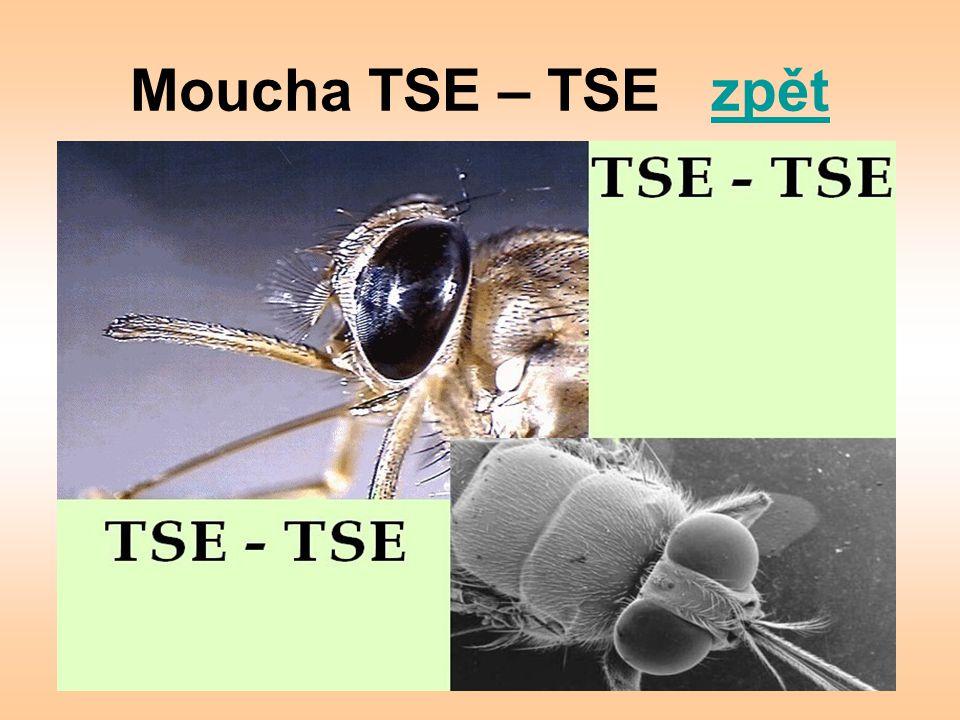 Moucha TSE – TSE zpětzpět