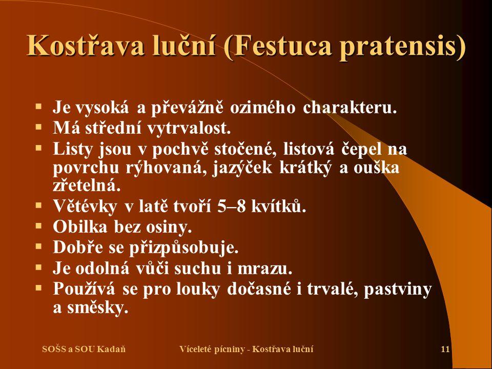 SOŠS a SOU KadaňVíceleté pícniny - Kostřava luční11 Kostřava luční (Festuca pratensis)  Je vysoká a převážně ozimého charakteru.  Má střední vytrval