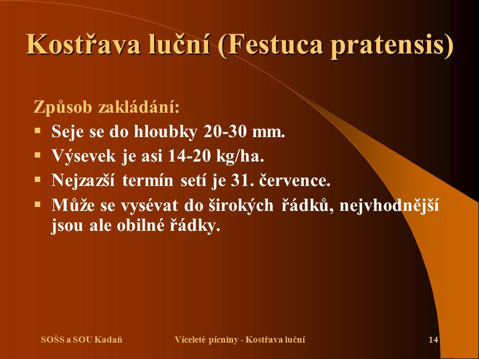 SOŠS a SOU KadaňVíceleté pícniny - Kostřava luční14 Způsob zakládání:  Seje se do hloubky 20-30 mm.  Výsevek je asi 14-20 kg/ha.  Nejzazší termín s