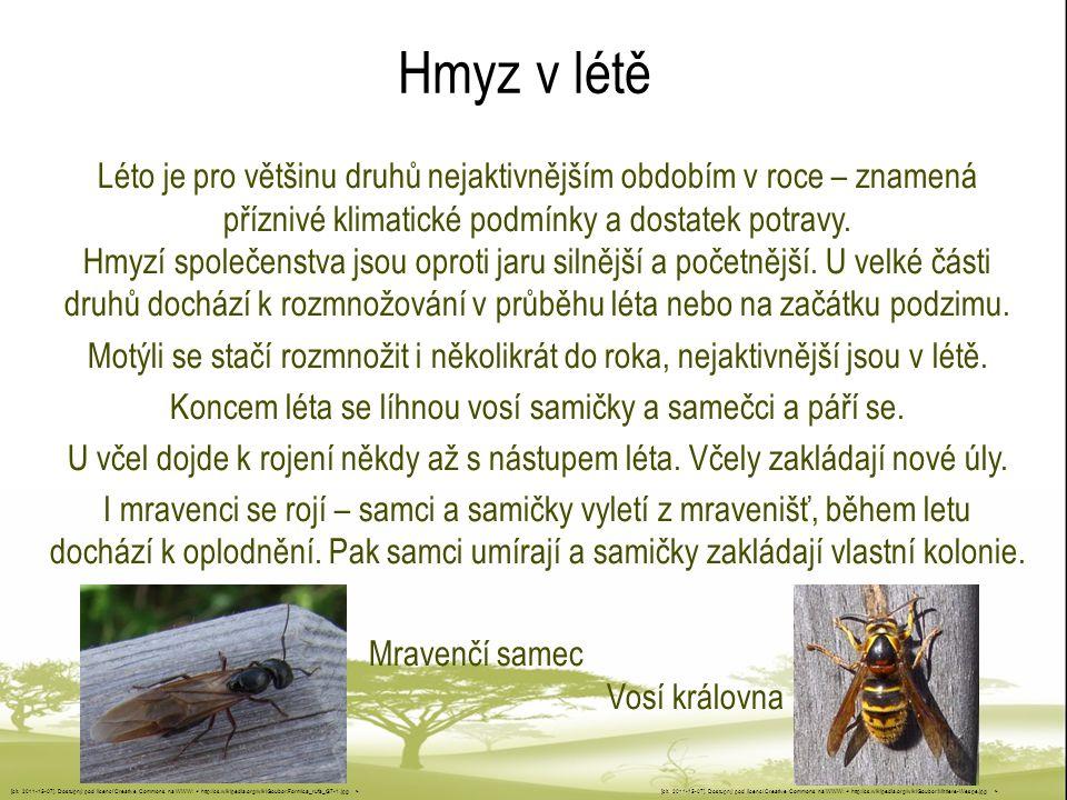 Hmyz v létě Léto je pro většinu druhů nejaktivnějším obdobím v roce – znamená příznivé klimatické podmínky a dostatek potravy.
