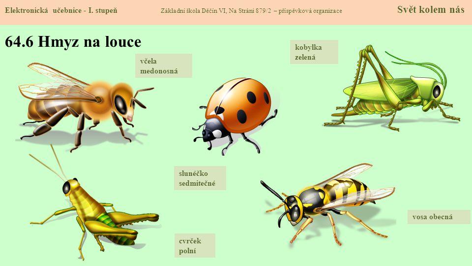 64.6 Hmyz na louce Elektronická učebnice - I. stupeň Základní škola Děčín VI, Na Stráni 879/2 – příspěvková organizace Svět kolem nás kobylka zelená v
