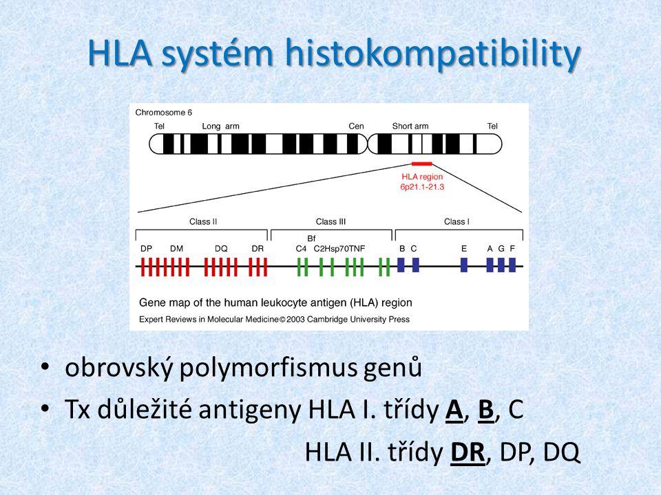 HLA systém histokompatibility obrovský polymorfismus genů Tx důležité antigeny HLA I.