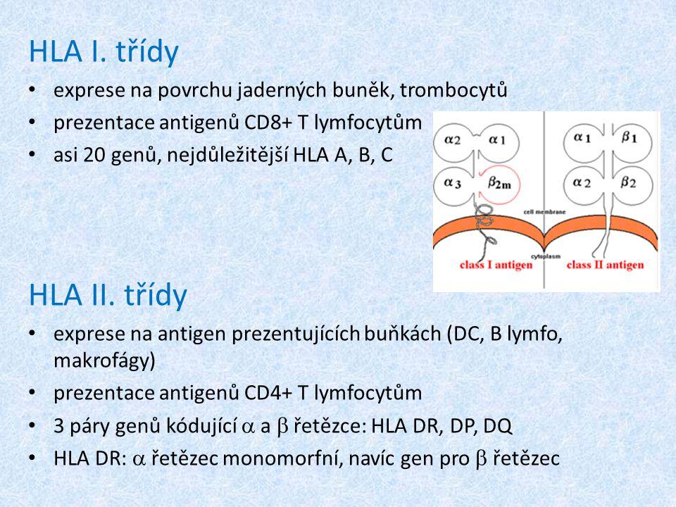 Polymorfismus HLA lokusAntigenní variantyDNA varianty HLA-A2583 HLA-B53186 HLA-C1142 HLA-DR (pouze  řetězec) 20221 HLA-DQ (  a  řetězce) 949 HLA-DP (  a  řetězce) 688 antigenní varianty (specifity) – některé důsledkem odlišností v AMK složení v určitém  nebo  řetězci, určené serotypizační metodou DNA varianty – u HLA alel definovaných serologicky zjištěny další varianty v DNA sekvenci Př.