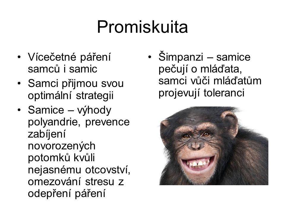 Promiskuita Vícečetné páření samců i samic Samci přijmou svou optimální strategii Samice – výhody polyandrie, prevence zabíjení novorozených potomků kvůli nejasnému otcovství, omezování stresu z odepření páření Šimpanzi – samice pečují o mláďata, samci vůči mláďatům projevují toleranci