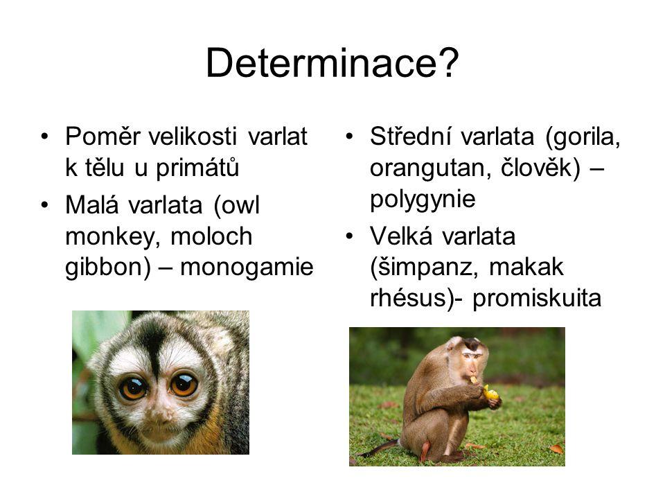 Determinace.