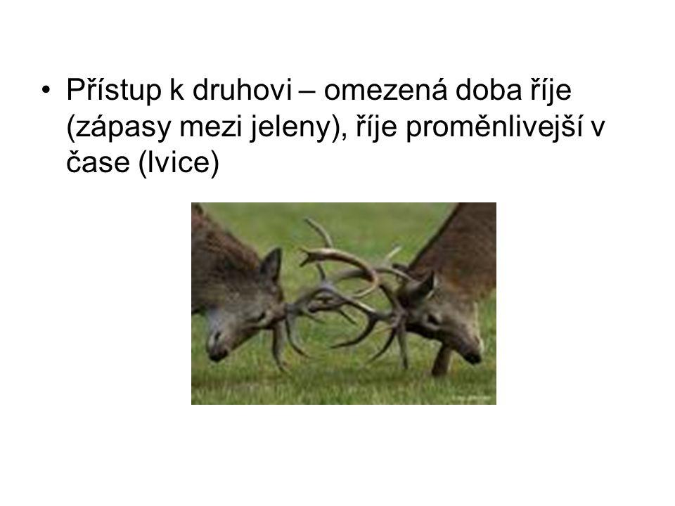 Přístup k druhovi – omezená doba říje (zápasy mezi jeleny), říje proměnlivejší v čase (lvice)
