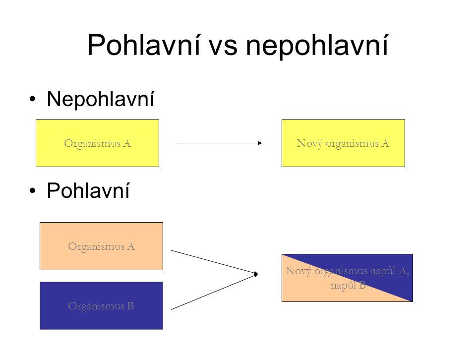 Pohlavní vs nepohlavní Nepohlavní Pohlavní Organismus ANový organismus A Organismus B Organismus A Nový organismus napůl A, napůl B