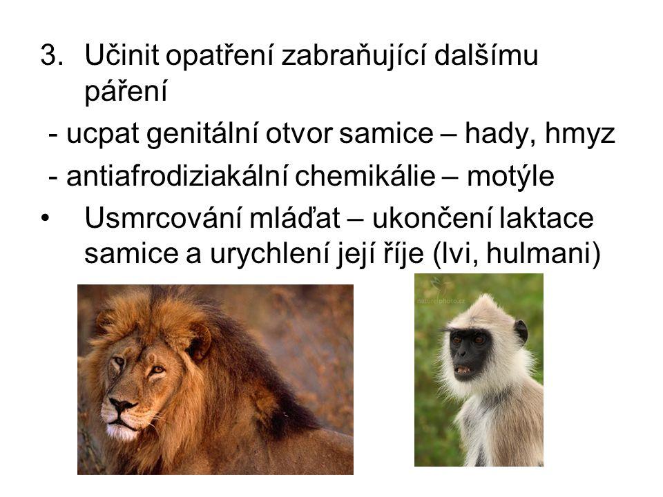 3.Učinit opatření zabraňující dalšímu páření - ucpat genitální otvor samice – hady, hmyz - antiafrodiziakální chemikálie – motýle Usmrcování mláďat – ukončení laktace samice a urychlení její říje (lvi, hulmani)