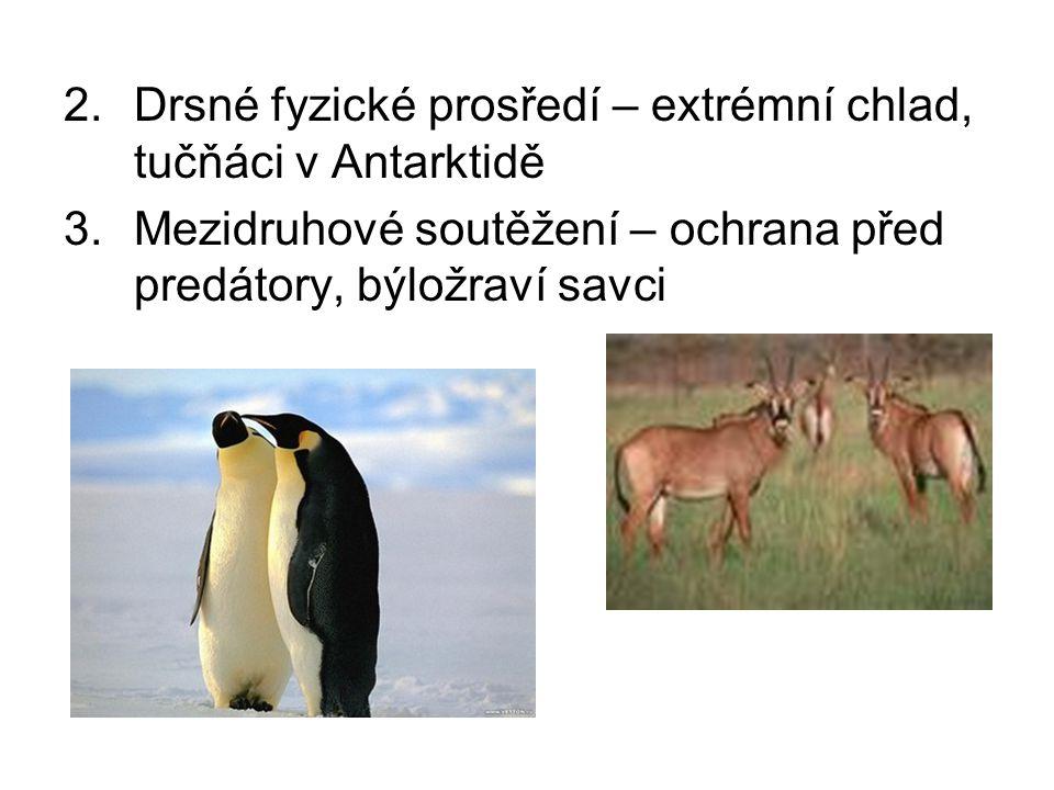 2.Drsné fyzické prosředí – extrémní chlad, tučňáci v Antarktidě 3.Mezidruhové soutěžení – ochrana před predátory, býložraví savci