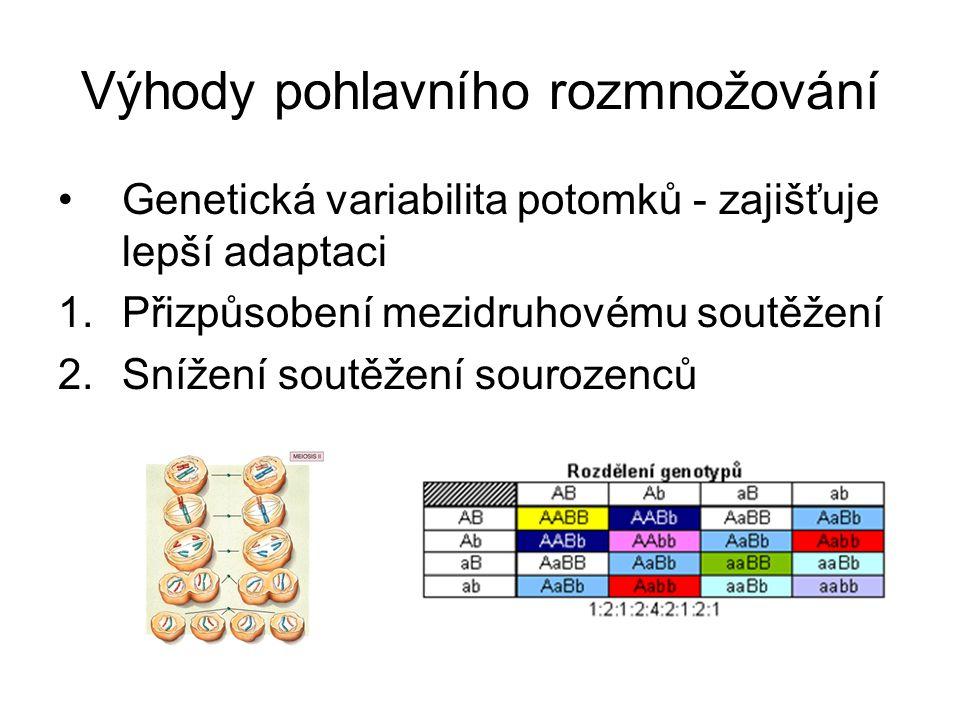 Výhody pohlavního rozmnožování Genetická variabilita potomků - zajišťuje lepší adaptaci 1.Přizpůsobení mezidruhovému soutěžení 2.Snížení soutěžení sourozenců