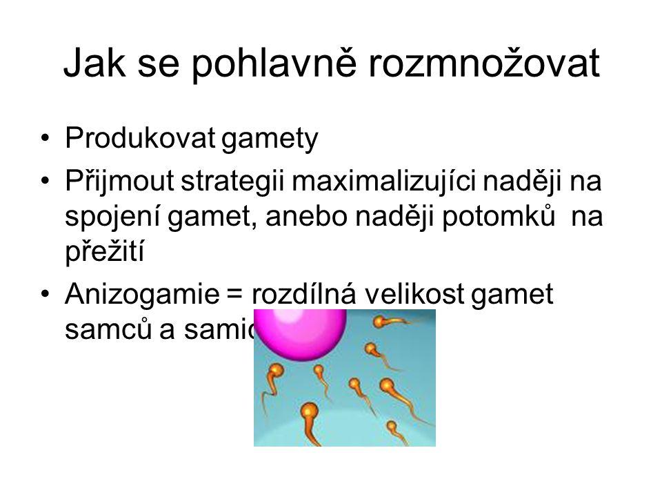 Jak se pohlavně rozmnožovat Produkovat gamety Přijmout strategii maximalizujíci naději na spojení gamet, anebo naději potomků na přežití Anizogamie = rozdílná velikost gamet samců a samic