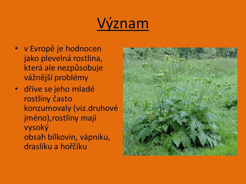 Význam v Evropě je hodnocen jako plevelná rostlina, která ale nezpůsobuje vážnější problémy dříve se jeho mladé rostliny často konzumovaly (viz.druhové jméno),rostliny mají vysoký obsah bílkovin, vápníku, draslíku a hořčíku