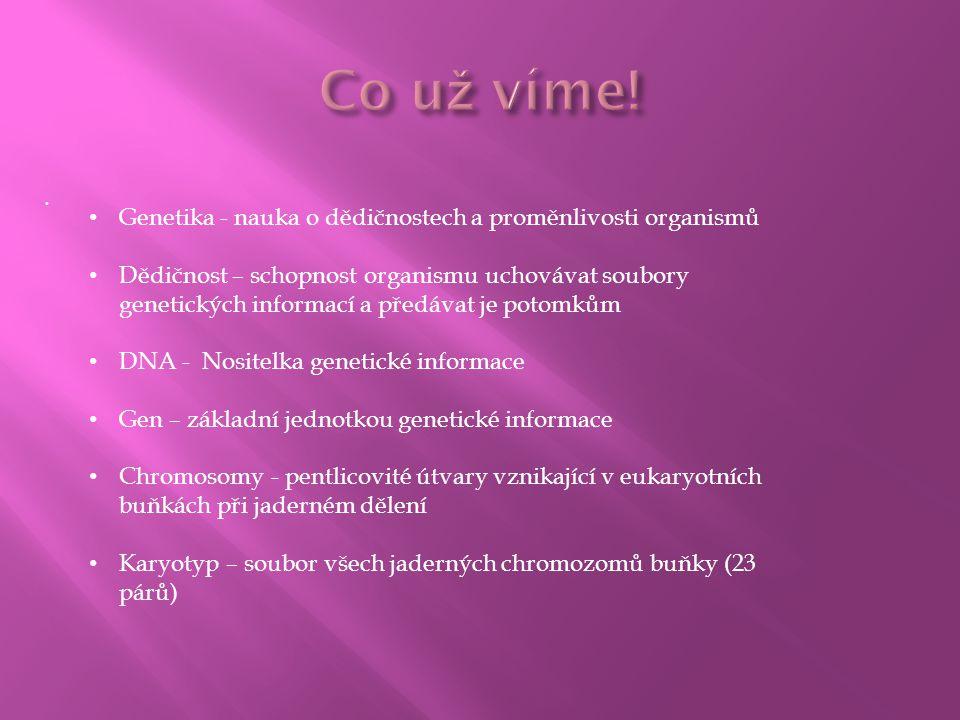 . Genetika - nauka o dědičnostech a proměnlivosti organismů Dědičnost – schopnost organismu uchovávat soubory genetických informací a předávat je poto