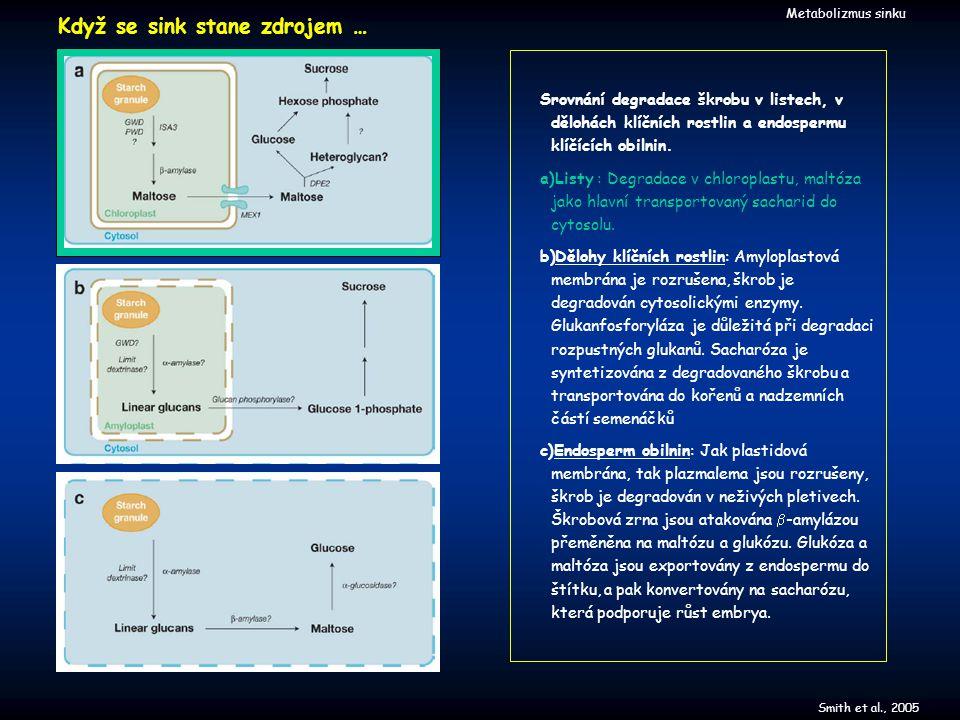 Smith et al., 2005 Metabolizmus sinku Srovnání degradace škrobu v listech, v dělohách klíčních rostlin a endospermu klíčících obilnin. a)Listy : Degra