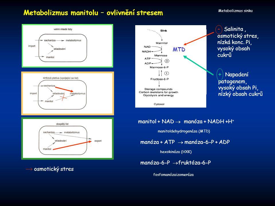 Metabolizmus sinku  osmotický stres Metabolizmus manitolu – ovlivnění stresem manitol + NAD  manóza + NADH +H + manóza + ATP  manóza-6-P + ADP manó