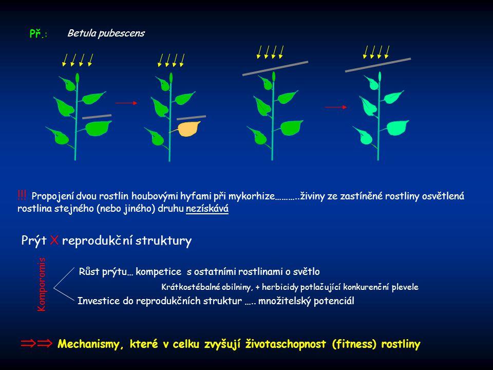 Betula pubescens Př.:  Mechanismy, které v celku zvyšují životaschopnost (fitness) rostliny !!! Propojení dvou rostlin houbovými hyfami při mykorhiz