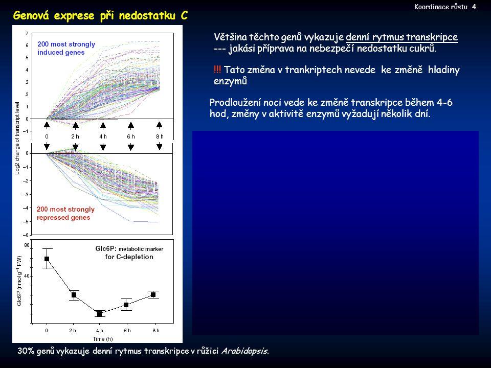Většina těchto genů vykazuje denní rytmus transkripce --- jakási příprava na nebezpečí nedostatku cukrů. !!! Tato změna v trankriptech nevede ke změně