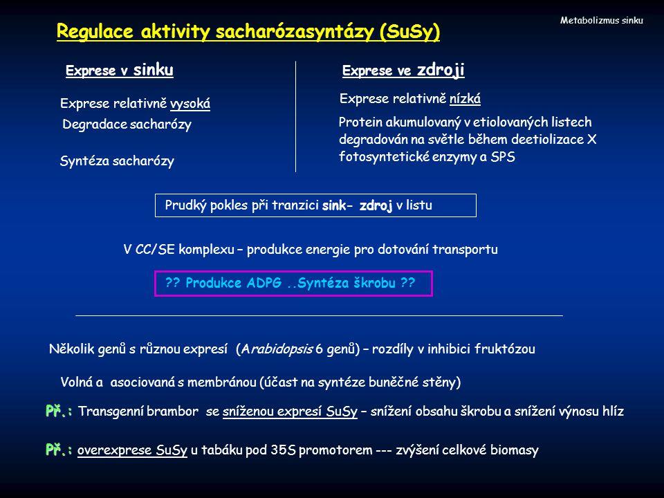 Metabolizmus sinku Regulace aktivity sacharózasyntázy (SuSy) V CC/SE komplexu – produkce energie pro dotování transportu ?? Produkce ADPG..Syntéza škr