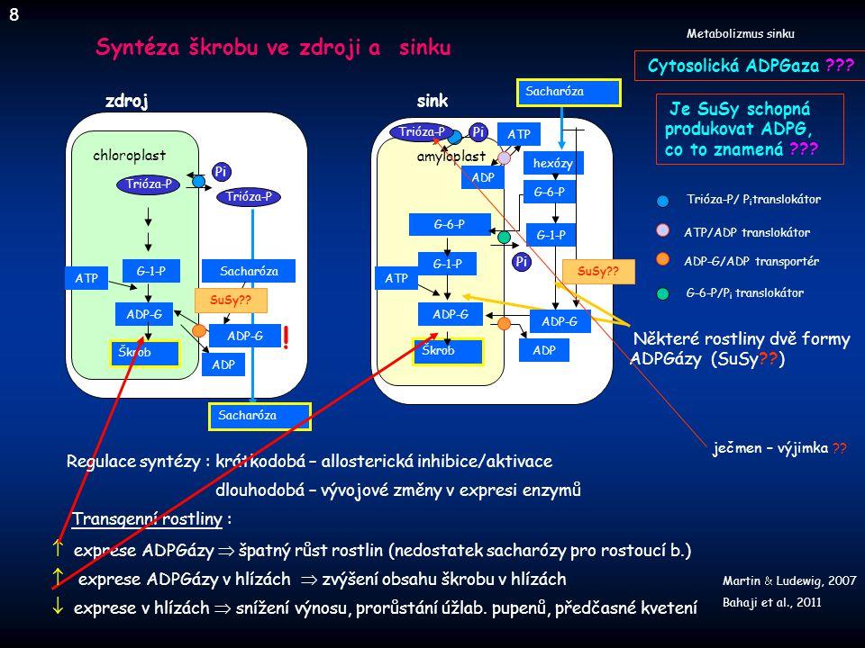 chloroplast cytosol TRX Škrob Trióza-P Pi ADPGáza Fruktóza 6-P Fruktóza 1,6 bis-P Glukóza 1-P ATP PP i ADP-Glukóza Ru-1,5 P 2 Sacharóza 6-P Sacharóza Glukóza 1-P UDP-Glukóza Fruktóza 6-P Glukóza 6-P SPS low SPS high SnRK1 fosfatáza SnRK1 T-6-P T-6-P SnRk1 Nedostatek G-6 -P   SnRk1  dočasné zastavení růstu Přizpůsobení syntézy škrobu po epizodě vyčerpání C SH HS Světlem indukovaná aktivace zprostředkovaná thioredoxinem Cukrem indukovaná aktivace zprostředkovaná thioredoxinem (přes T-6-P) Zvýšení obsahu cukrů, když je obnovena dostupnost C T-6-P  syntéza T-6-P