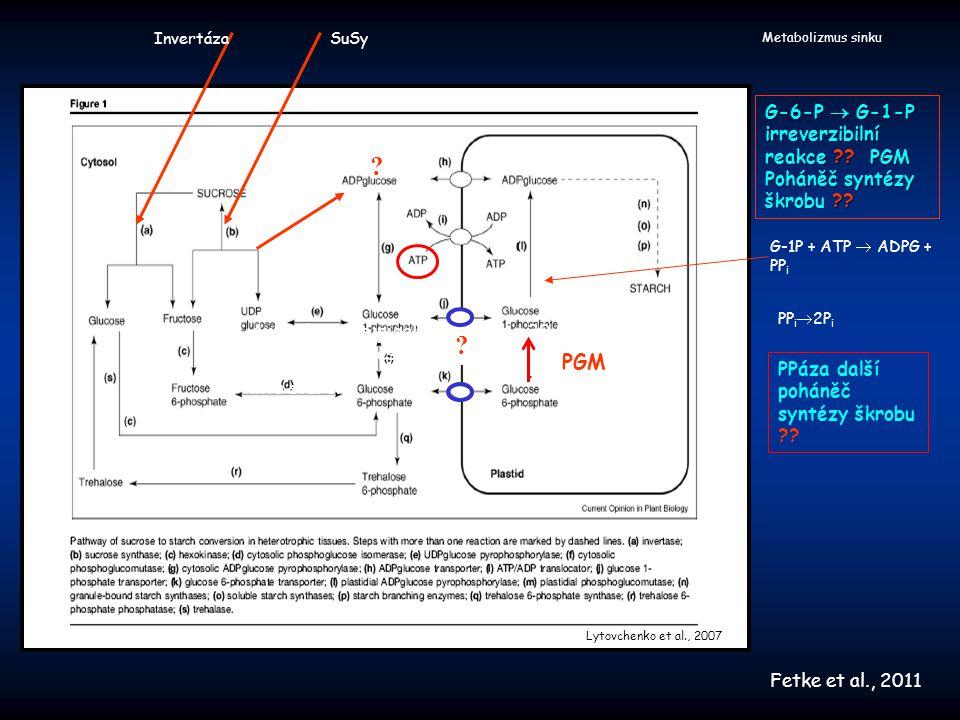 """Metabolizmus sinku Baroja-Fernandez et al., 2006 Endocytické inhibitory : sníží syntézu škrobu sníží hladinu ADPG, UDPG neovlivní hladinu hexóza-P Žádný efekt inhibitorů při zásobování glukózou Acer pseudoplatanus (buněčné suspenze), disky hlíz bramboru, vyvíjející se endosperm ječmene Žádný konflikt s transportem pomocí transportérů Představa : počáteční fáze transportu (začátek dne) -- transportéry """"vrcholná fáze transportu --- endocytóza Příjem sacharózy endocytózou"""