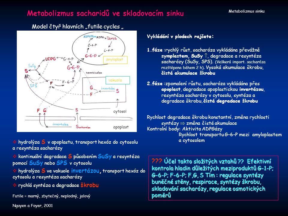 Metabolizmus sinku Metabolizmus sacharidů ve skladovacím sinku Účel takto složitých vztahů ?? Efektivní kontrola hladin důležitých meziproduktů G-1-P;
