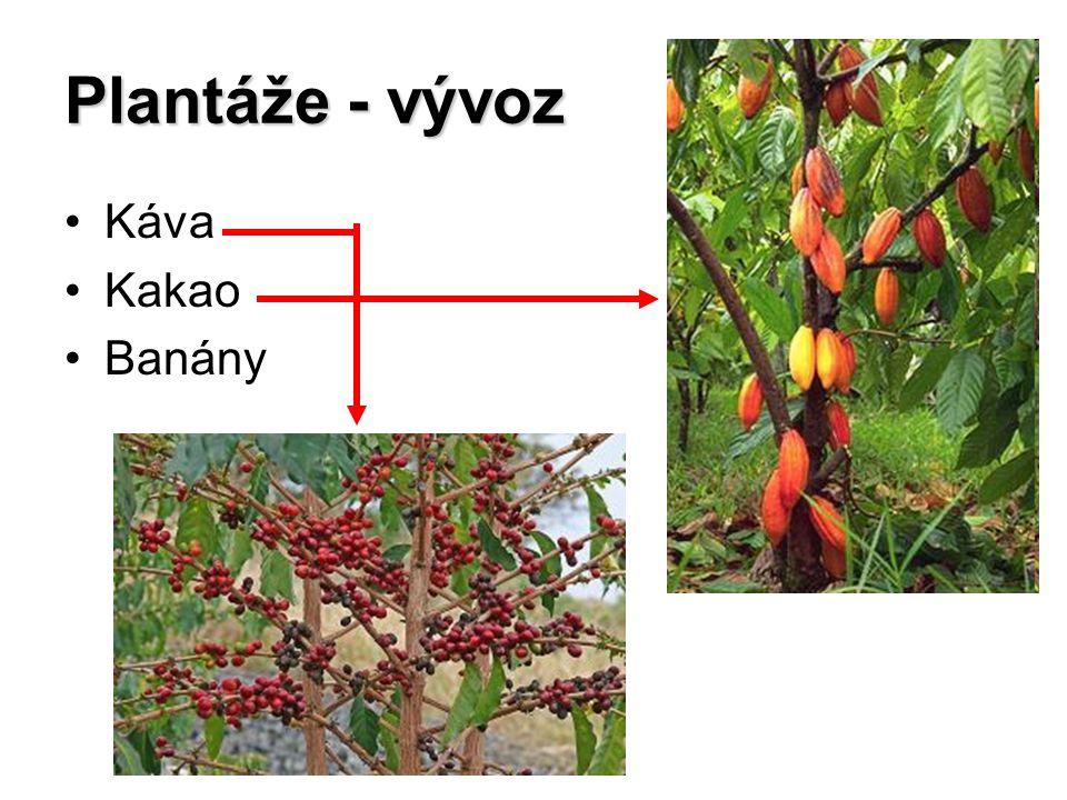 Plantáže - vývoz Káva Kakao Banány