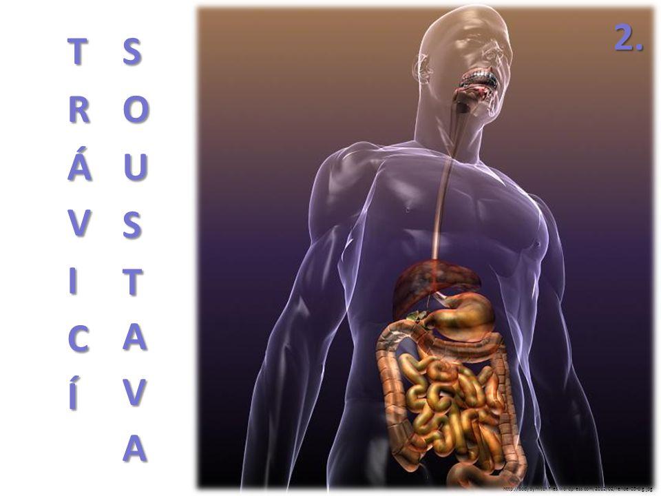 ŽALUDEK vakovitý svalový orgán mezi slezinou a játry stavba: http://us.123rf.com/400wm/400/400/woodoo007/woodoo0071109/woodoo007110900008/ 10611484-male-stomach-anatomy-of-human-organs-in-x-ray-view.jpg http://www.le.ac.uk/pa/teach/va/anatomy/case6/gi2.gif
