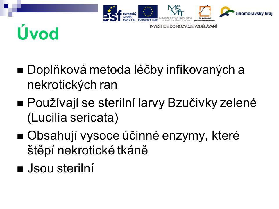 Úvod Doplňková metoda léčby infikovaných a nekrotických ran Používají se sterilní larvy Bzučivky zelené (Lucilia sericata) Obsahují vysoce účinné enzymy, které štěpí nekrotické tkáně Jsou sterilní