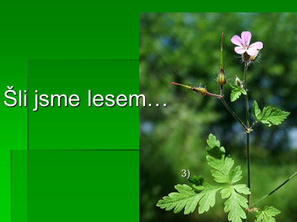 …bahnem, polem, loukou… 4) 5)