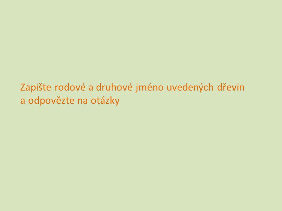 Jinan dvoulaločný (Ginkgo biloba) Zapiš i latinský název. Foto: Svatava Rozsypalová
