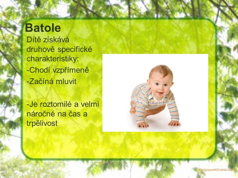 Batole Dítě získává druhově specifické charakteristiky: -Chodí vzpřímeně -Začíná mluvit -Je roztomilé a velmi náročné na čas a trpělivost