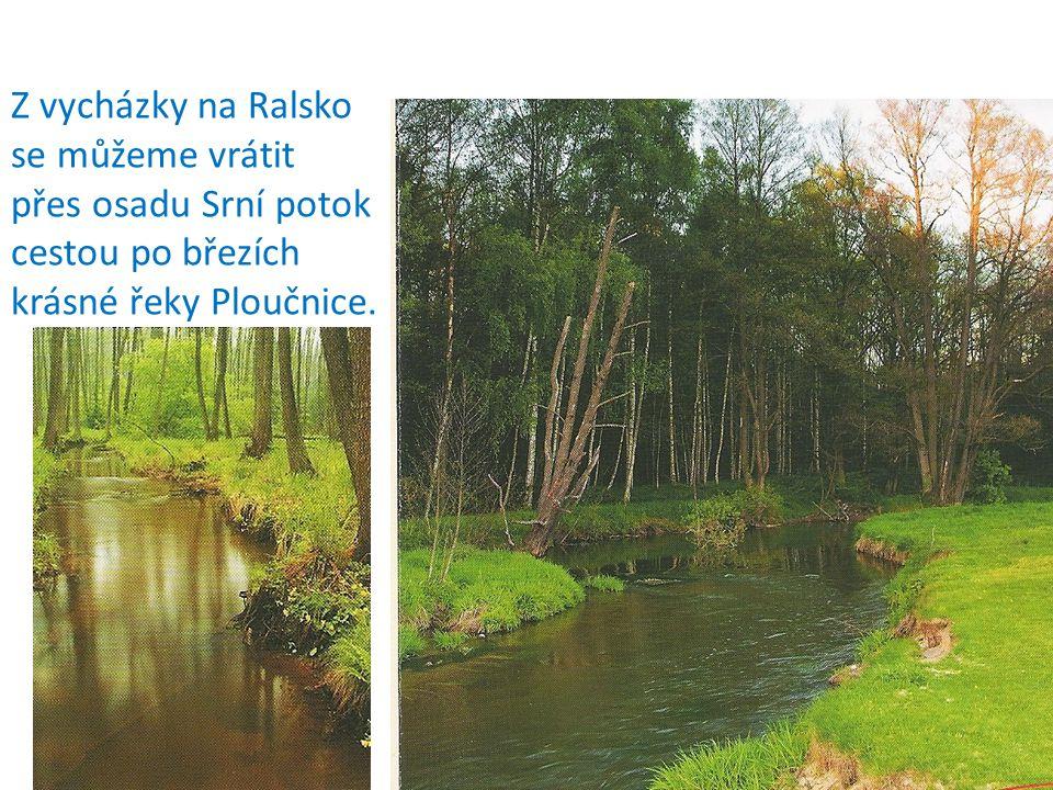 Z vycházky na Ralsko se můžeme vrátit přes osadu Srní potok cestou po březích krásné řeky Ploučnice.