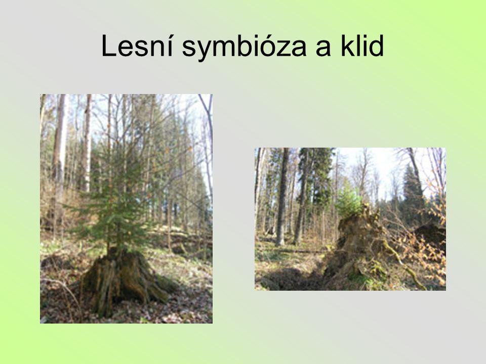 Lesní symbióza a klid