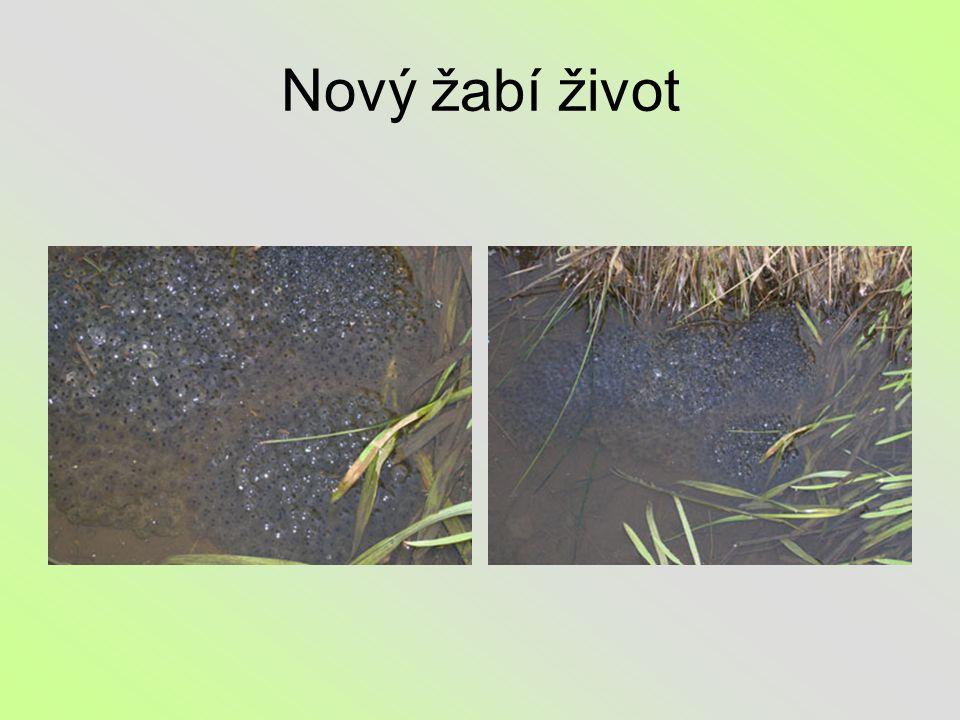 Nový žabí život