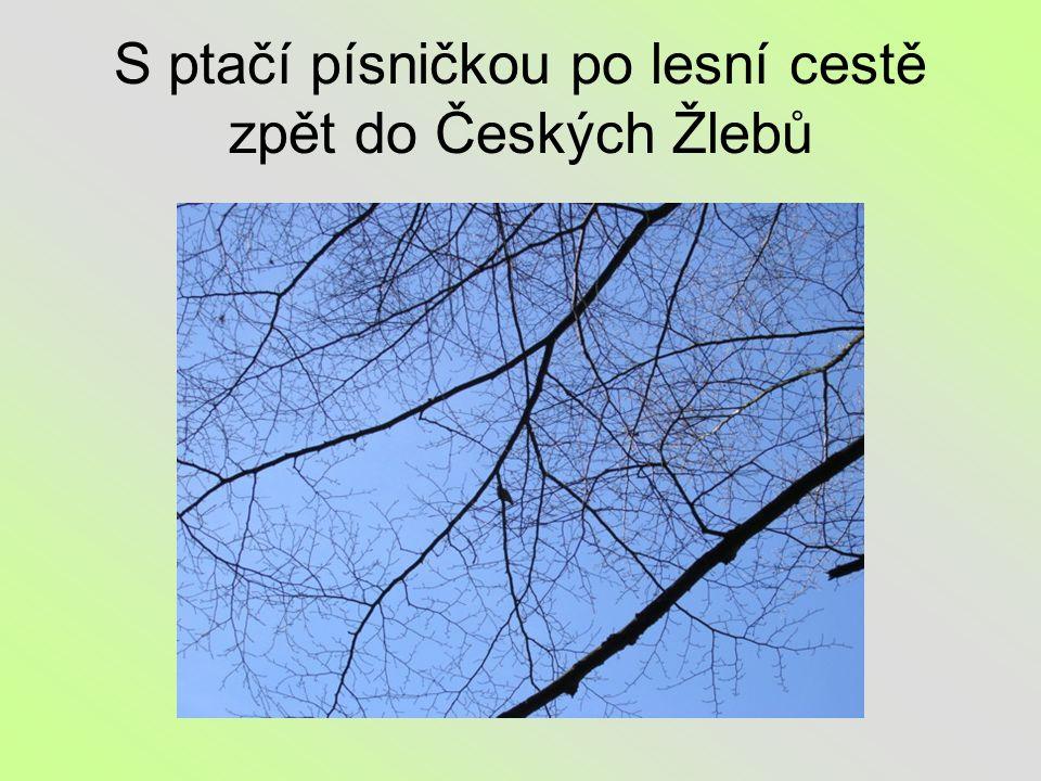S ptačí písničkou po lesní cestě zpět do Českých Žlebů