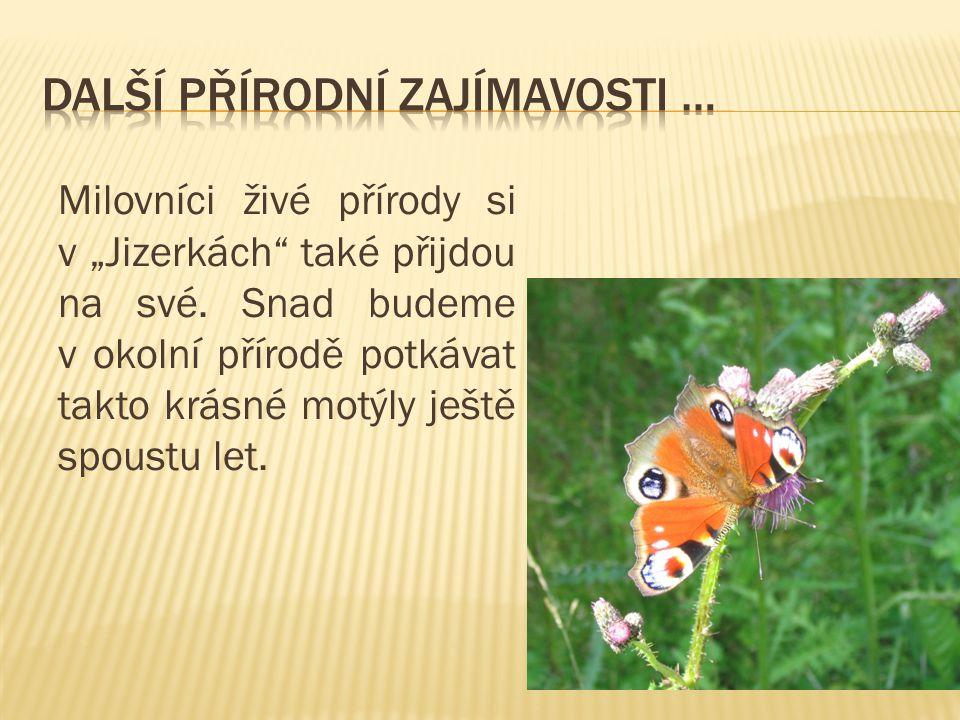 """Milovníci živé přírody si v """"Jizerkách také přijdou na své."""