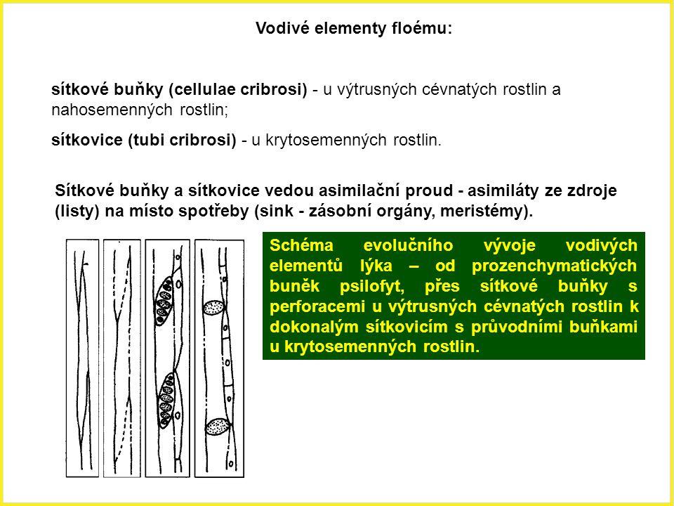 Vodivé elementy floému: sítkové buňky (cellulae cribrosi) - u výtrusných cévnatých rostlin a nahosemenných rostlin; sítkovice (tubi cribrosi) - u kryt