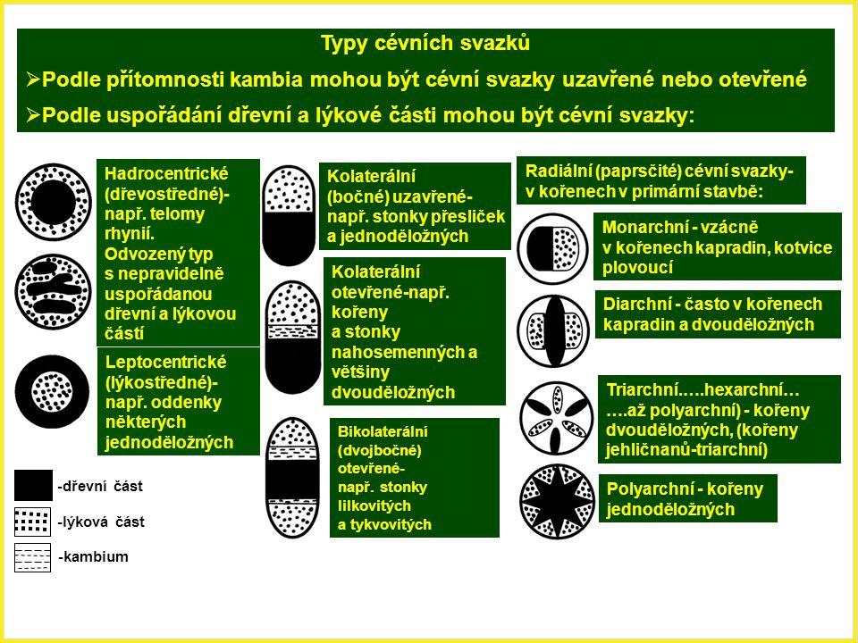 Hadrocentrické (dřevostředné)- např. telomy rhynií. Odvozený typ s nepravidelně uspořádanou dřevní a lýkovou částí Leptocentrické (lýkostředné)- např.