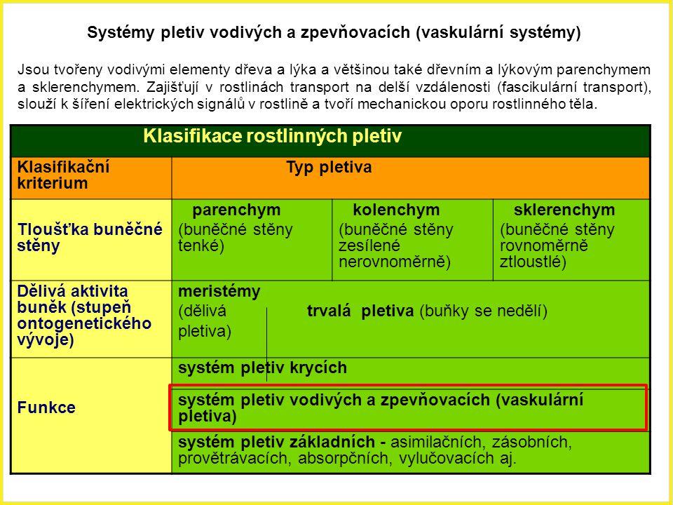 Klasifikace rostlinných pletiv Klasifikační kriterium Typ pletiva Tloušťka buněčné stěny parenchym (buněčné stěny tenké) kolenchym (buněčné stěny zesí