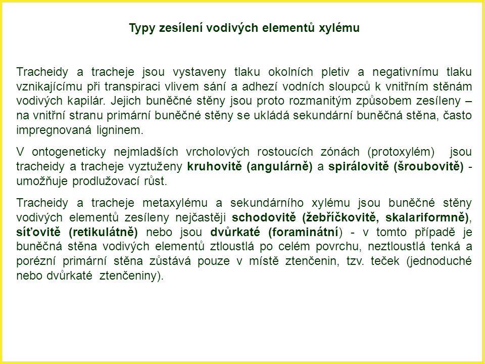 Typy zesílení vodivých elementů xylému Tracheidy a tracheje jsou vystaveny tlaku okolních pletiv a negativnímu tlaku vznikajícímu při transpiraci vliv