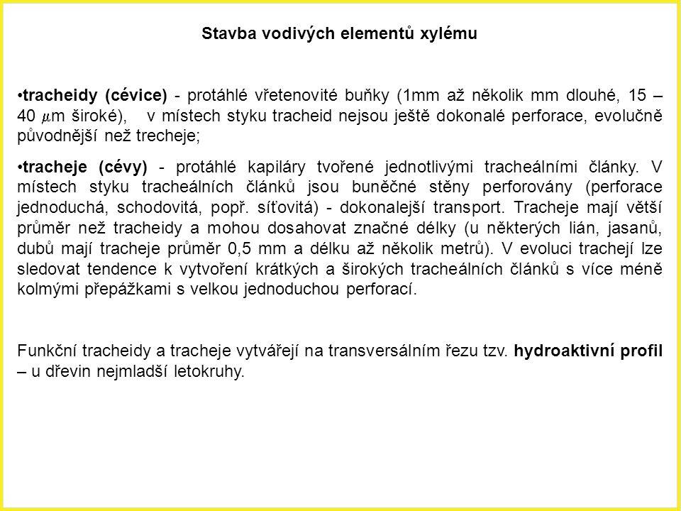 Cévní svazky Část dřevní (xylém, hadrom, část vazální) Část lýková (floém, leptom, část kribrální) Vodivé elementy xylému - tracheidy, tracheje – vedou transpirační proud Dřevní parenchym - zásobní, vodivá funkce Dřevní sklerenchym (libriform) - mechanická funkce Vodivé elementy floému - sítkovice, popř.