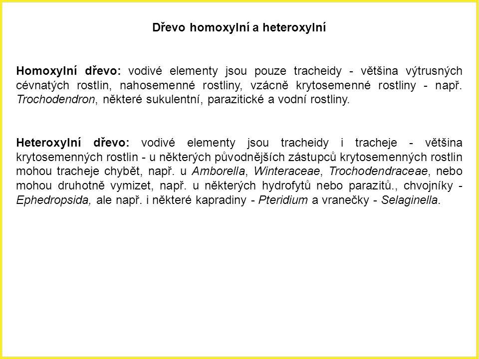 Dřevo homoxylní a heteroxylní Homoxylní dřevo: vodivé elementy jsou pouze tracheidy - většina výtrusných cévnatých rostlin, nahosemenné rostliny, vzác