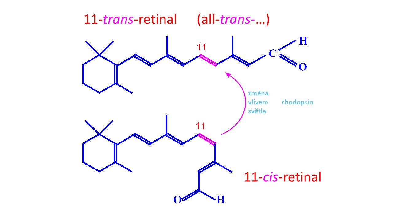 11-trans-retinal (all-trans-…) 11-cis-retinal změna vlivem rhodopsin světla