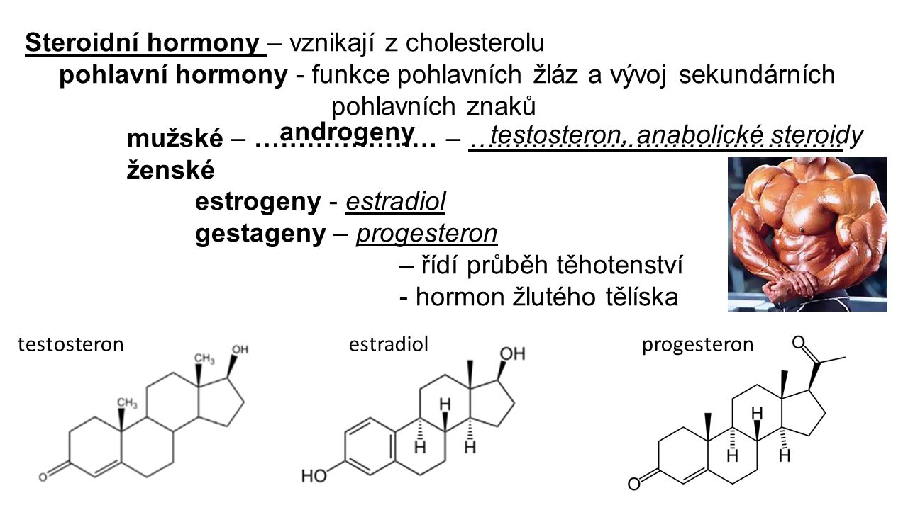 Steroidní hormony – vznikají z cholesterolu pohlavní hormony - funkce pohlavních žláz a vývoj sekundárních pohlavních znaků mužské – ………………… – …………………