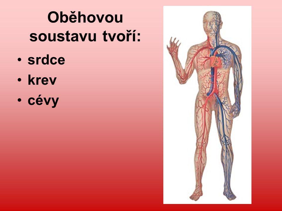Cévy Tepny – rozvádějí po těle okysličenou krev ze srdce Žíly – vracejí odkysličenou krev přes srdce do plic Krevní vlásečnice