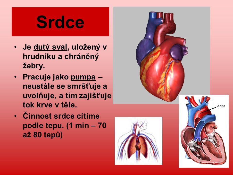 Srdce Je dutý sval, uložený v hrudníku a chráněný žebry. Pracuje jako pumpa – neustále se smršťuje a uvolňuje, a tím zajišťuje tok krve v těle. Činnos