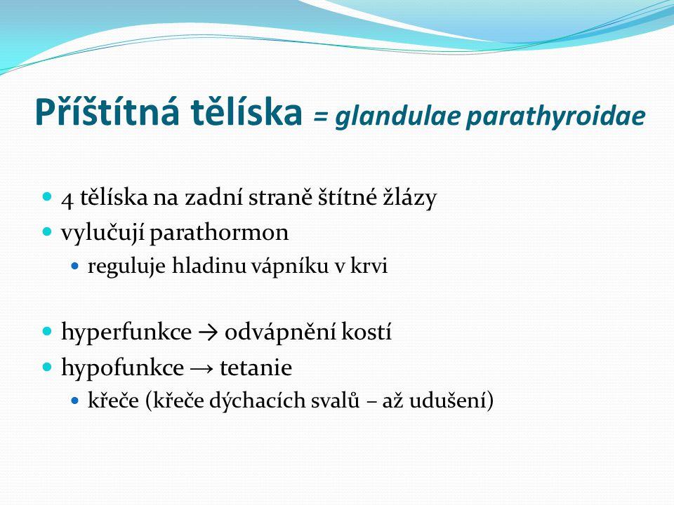 Příštítná tělíska = glandulae parathyroidae 4 tělíska na zadní straně štítné žlázy vylučují parathormon reguluje hladinu vápníku v krvi hyperfunkce →