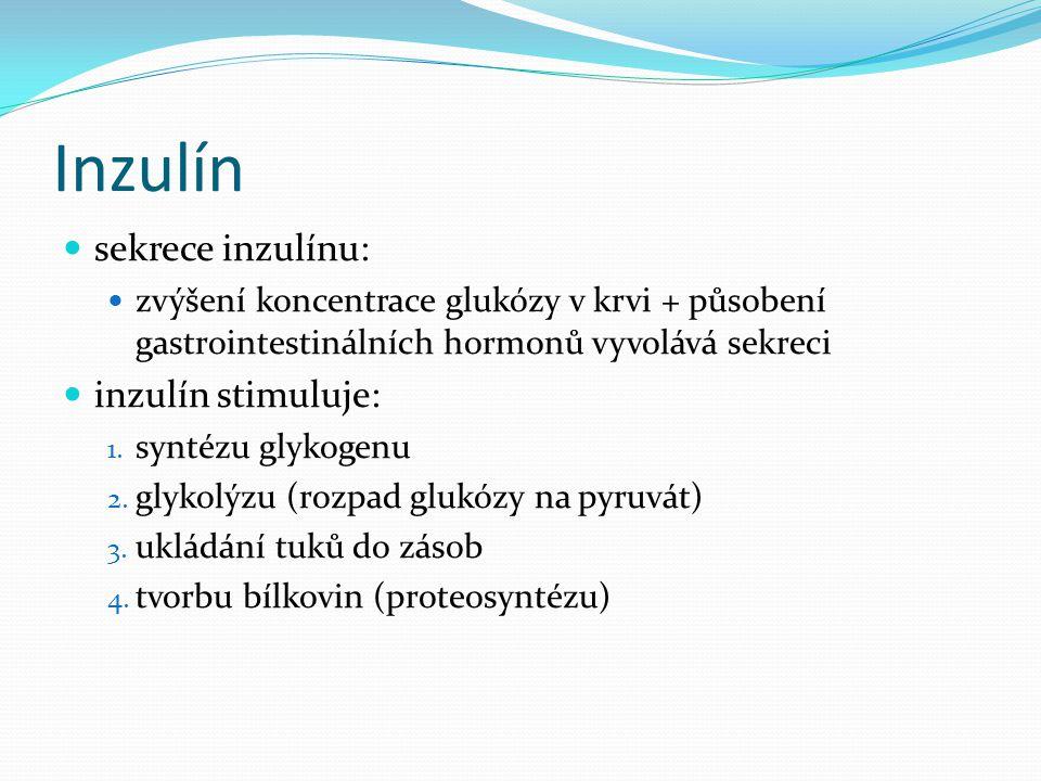 Inzulín sekrece inzulínu: zvýšení koncentrace glukózy v krvi + působení gastrointestinálních hormonů vyvolává sekreci inzulín stimuluje: 1. syntézu gl