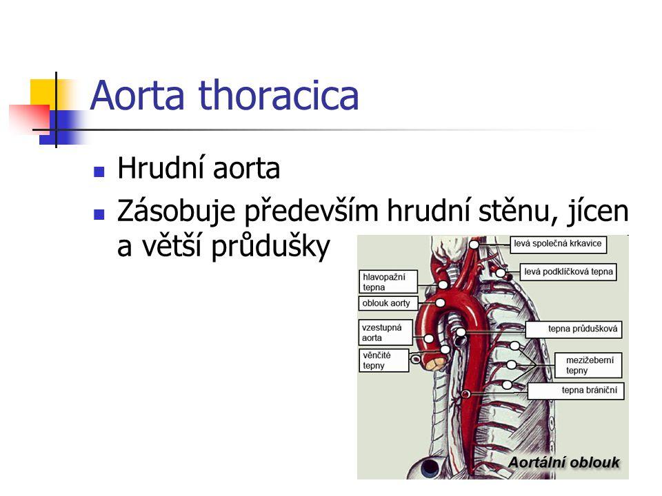 Aorta thoracica Hrudní aorta Zásobuje především hrudní stěnu, jícen a větší průdušky