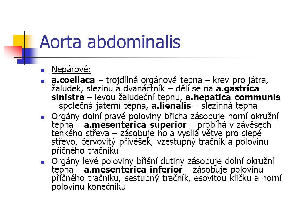Aorta abdominalis Nepárové: a.coeliaca – trojdílná orgánová tepna – krev pro játra, žaludek, slezinu a dvanáctník – dělí se na a.gastrica sinistra – l
